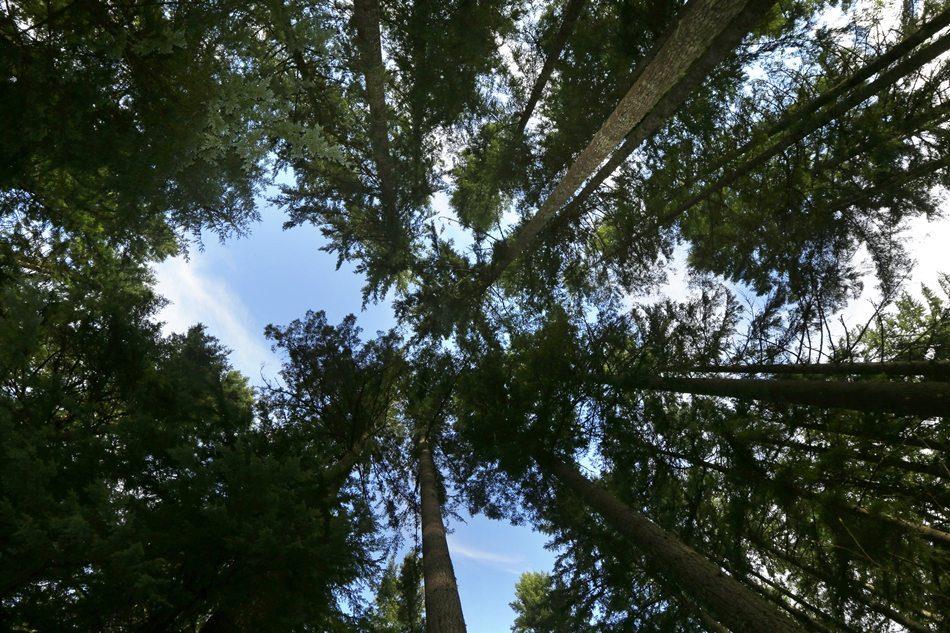 Carbon Forest Mount Rainier