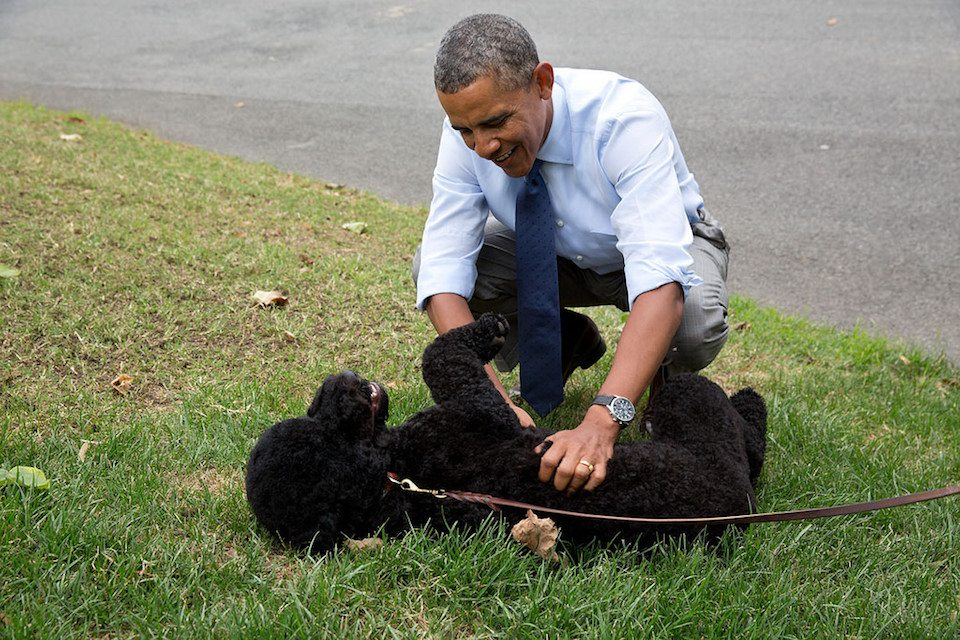 President Barack Obama with Sunny. Remember when we had a president who liked animals?