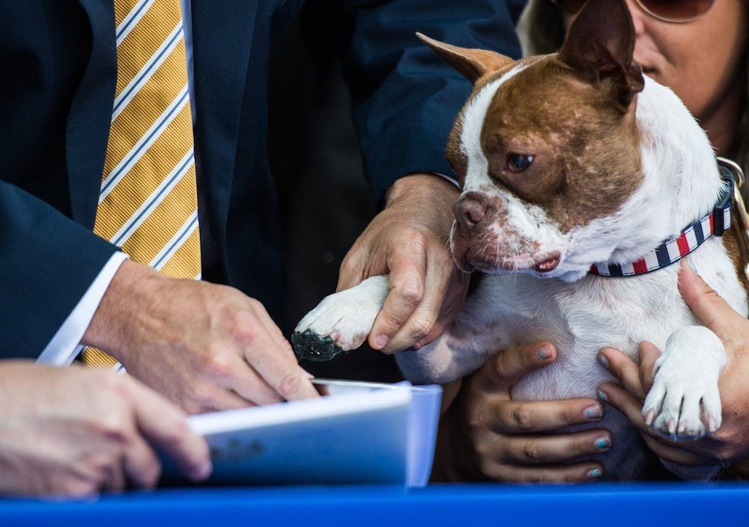 Libre leaves his paw print of approval on the anti-cruelty law named after him