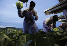 Immigrants, farmworkers