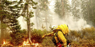 California firefighter with hose at forest fire